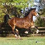 Goldistock -''Magnificent Horses'' Eco-Friendly 2019 Large Wall Calendar - 12'' x 24'' (Open) - Thick & Sturdy Paper - Grace in Motion