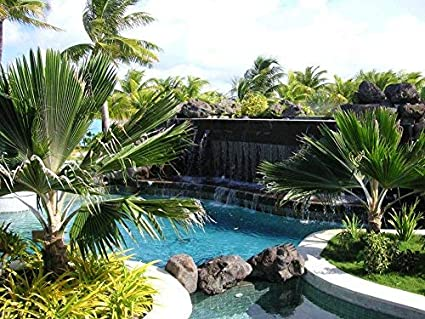 Amazon.com: Waterfall and Lagoon Swimming Pool at St Regis ...