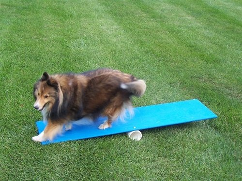 Agility Gear Teeter and Contact Teacher Teeter Totter Dog