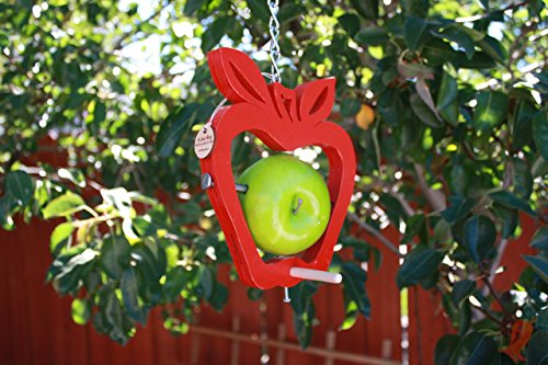 Apple Style Fruit and Suet Bird Feeder Review
