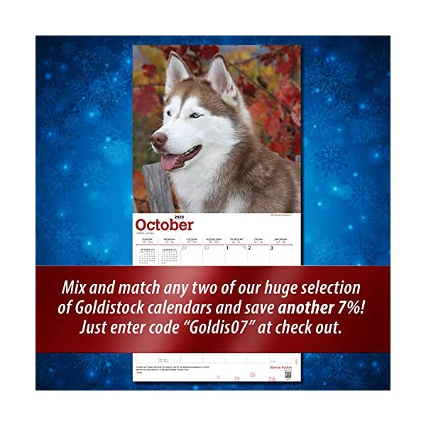 """Goldistock 2020 Large Wall Calendar -""""Siberian Huskies"""" - 12"""" x 24"""" (Open) - Thick & Sturdy Paper - - Fun-Loving and Outgoing Dogs 4"""
