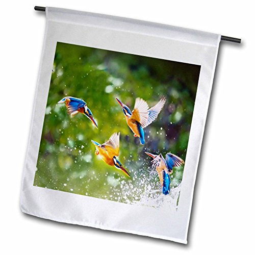 Many Wildlife Animals (3dRose Sven Herkenrath Animal - Many Exotic Birds in the Free Nature Wildlife Jungle Animal - 18 x 27 inch Garden Flag (fl_254229_2))