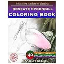 ROSEATE SPOONBILL Coloring book for Adults Relaxation  Meditation Blessing: Sketches Coloring Book 40 Grayscale Images