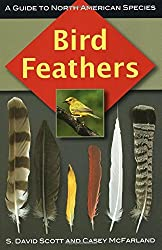 Bird Feathers: A Guide to North American Species