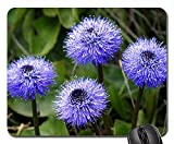 Mouse Pad - Globularia Wild Flowers Mountain Summer