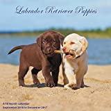 Puppies Calendar - 2017 Wall Calendars - Calendar 2016 - Dog Breed Calendars - Monthly Wall Calendar - Labrador Retriever Puppies Calendar by Magnum