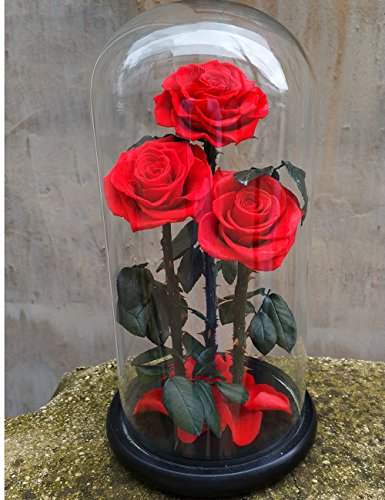 Preserved Rose Never Withered Roses Flower in Glass Dome, Gift for Valentine's Day Anniversary Birthday (Red 2) by Smequeen