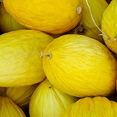 Crenshaw Melon Garden Seeds - Non-GMO, Heirloom Vegetable Gardening Seeds - Fruit