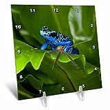 3dRose Danita Delimont - Frogs - South America, Suriname. Blue dart frog on leaf. - 6x6 Desk Clock (dc_278323_1)