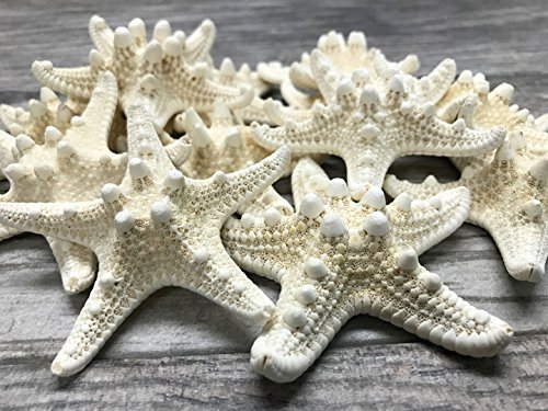 Knobby Starfish   12 Knobby StarFish White 3