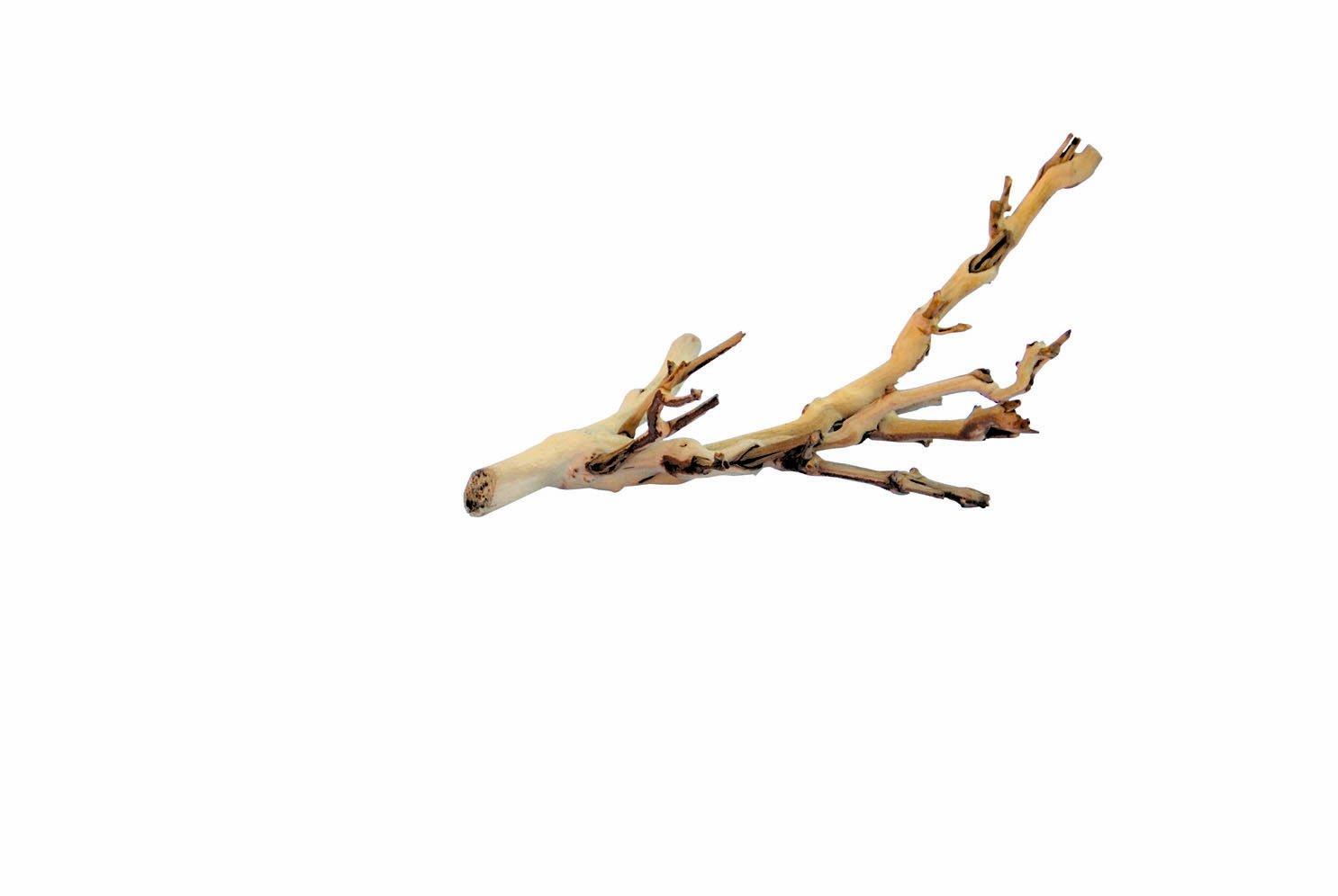 Exoterra Bois d'Ornement pour Reptiles Pied de Vigne Sablé PT3076