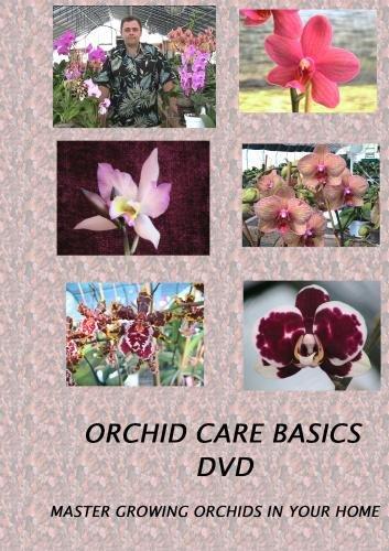 Orchid Care Basics - Orchid Care Oncidium