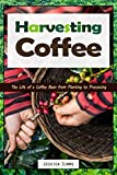 Harvesting Coffee: The Life of a Coffee Bean from Planting to Processing