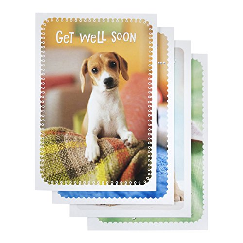 Get Well - Inspirational Boxed Cards - Whiskers and Paws (Well Boxed Cards)