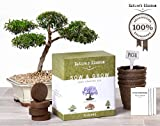 Natures's Blossom Sow and Grow 4 Bonsai Trees Germination Kit