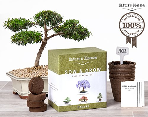 Little Greenhouse (Grow 4 Bonsai Trees with Nature's Blossom Growing Kit. Soil, Pots and Tree Seeds are included. Plants are Great for Indoor / Outdoor Gardens. Unique Gardening Gift For Beginners and)