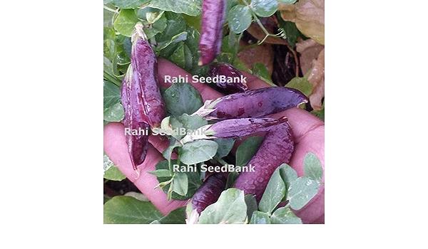 ScoutSeed Guisante morado - La variedad de arvejas moradas mà ...
