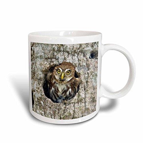 3Drose 3Drose Mexico  Tamaulipas State  Ferruginous Pygmy Owl   Sa13 Bja0121   Jaynes Gallery   Ceramic Mug  11 Ounce  Mug 86591 1     White