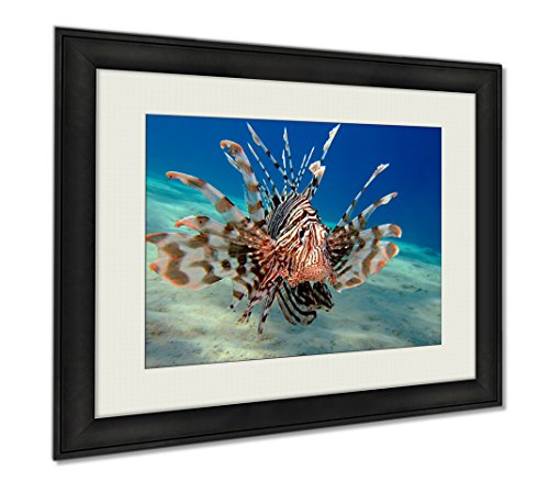 Ashley Framed Prints Lionfish, Wall Art Home Decoration, Color, 34x40 (frame size), AG5977771 by Ashley Framed Prints