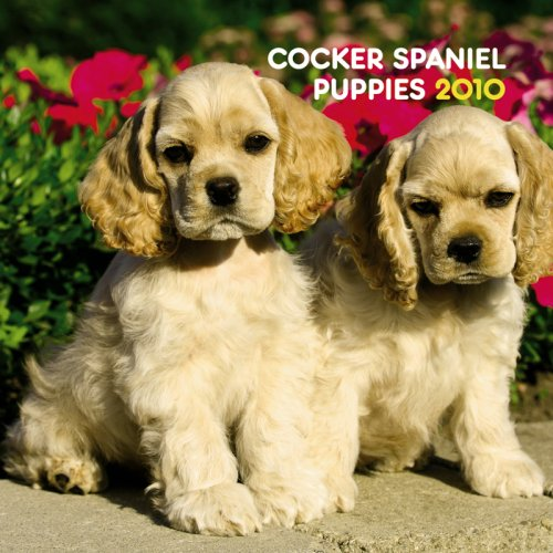 (Cocker Spaniel Puppies 2010 Mini Wall )