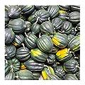 Table Queen Acorn Winter Squash Vegetable Seeds Non-GMO Annual