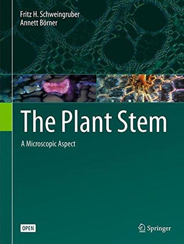 The Plant Stem: A Microscopic Aspect
