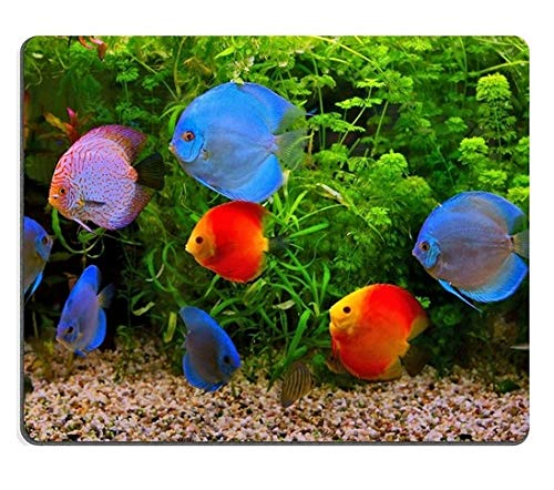 - 17P00622 Creativity Mousepad Gaming Mouse Pad Discus Symphysodon Multi Colored Cichlids in The Aquarium Freshwater Fish Native