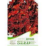 2018 New Arrivals!! Davitu 6 Types of Lettuce Purple Red Green Vegetables Seeds, Original Package - (Color C008)