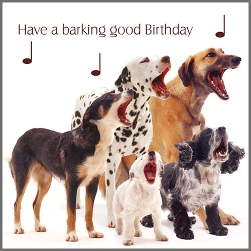 Mixed Dogs Dog Song Birthday Card Amazon Kitchen Home