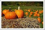Barewalls Pumpkins On Top of Hay Bale with Pumpkin