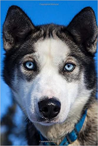 Buy Young Siberian Husky With Blue Eyes Puppy Dog Lined Journal Book
