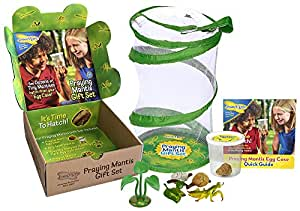 Insect Lore Live Praying Mantis Hatching Kit Gift Box Toy - Viewing Habitat with Live Egg Case Life Cycle Toy Figurines and More - SHIP NOW