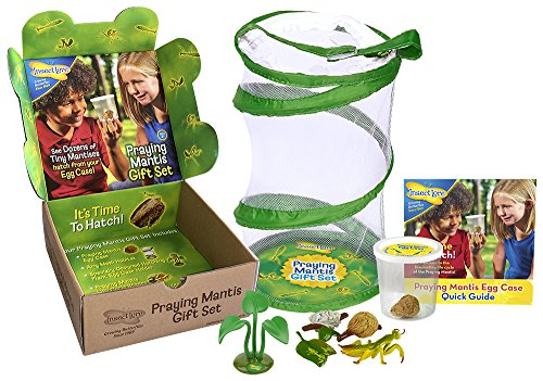 Praying Mantis Gift Set with Egg Case