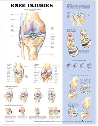 knee injuries anatomical chart knee pain diagram the knee joint laminated anatomy chart