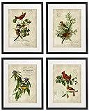 Idiopix Vintage Bird & Botanical Home Decor Wall Art Print No.1 Set of 4 Prints UNFRAMED