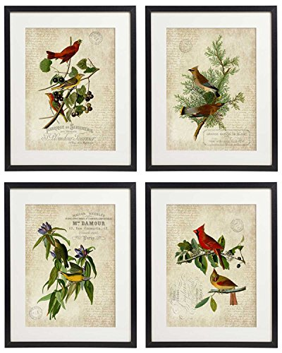 IDIOPIX Vintage Bird & Botanical Home Decor Wall Art Print No.1 Set of 4 Prints UNFRAMED