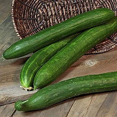 Burpless 26 F1 Cucumber Seeds - world's most popular burpless cuke!!!(10 - Seeds) : Garden & Outdoor