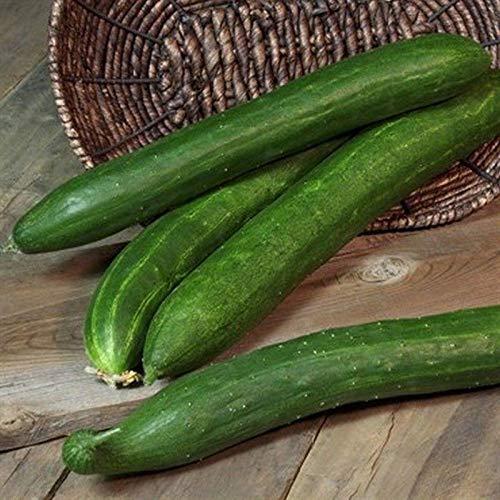 (Burpless 26 F1 Cucumber Seeds (40 Seed Pack))