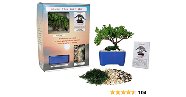 Eve S Bonsai Tree Starter Kit Complete Kit With 2 Year Old Japanese Juniper In Gift Box Live Indoor Bonsai Plants Grocery Gourmet Food Amazon Com