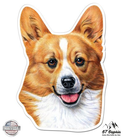 Welsh Corgi - 5