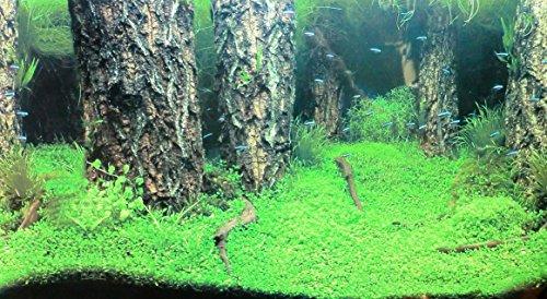 Rückwandfolie 100cm x 50 cm Rückwandposter für Aquarien