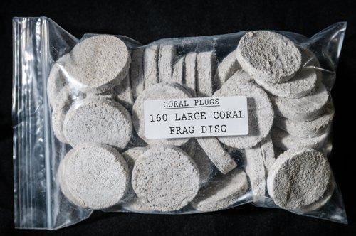 160 CURED REEF LARGE FRAG DISC LIVE CORAL FRAG PROPAGATION (Large Coral Disc)