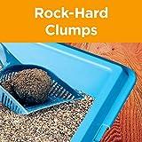 Arm & Hammer Clump & Seal AbsorbX Clumping