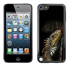 Diy Yourself GagaDesign cell phone Accessories: case cover for Apple iPod Touch 5 - Cool Iguana fRSkamuGIeu Lizard Reptile