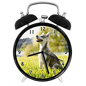 Alaskan Malamute, Klee Kai Puppy Sitting on Grass Looking Up Friendly Young Cute Animal, Multicolor Twin Bell Alarm Clock with Backlight,Desk Table Clock for Home and Office 4in - Black 7