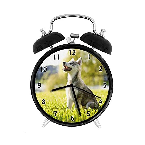 Alaskan Malamute, Klee Kai Puppy Sitting on Grass Looking Up Friendly Young Cute Animal, Multicolor Twin Bell Alarm Clock with Backlight,Desk Table Clock for Home and Office 4in - Black 1