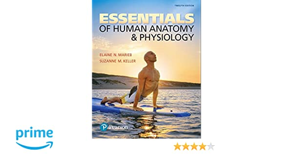 Essentials of Human Anatomy & Physiology (12th Edition): Elaine N