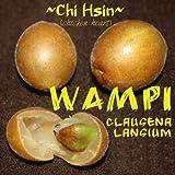 ~WAMPI~ Clausena lansium CHINESE 'CHICKEN HEARTS' Fruit Tree LIVE Plant Starter