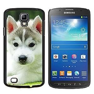 KLONGSHOP // Cubierta de piel con cierre a presión Shell trasero duro de goma Protección Caso - Husky Malamute Técnica del perro de perrito - Samsung Galaxy S4 Active i9295 //