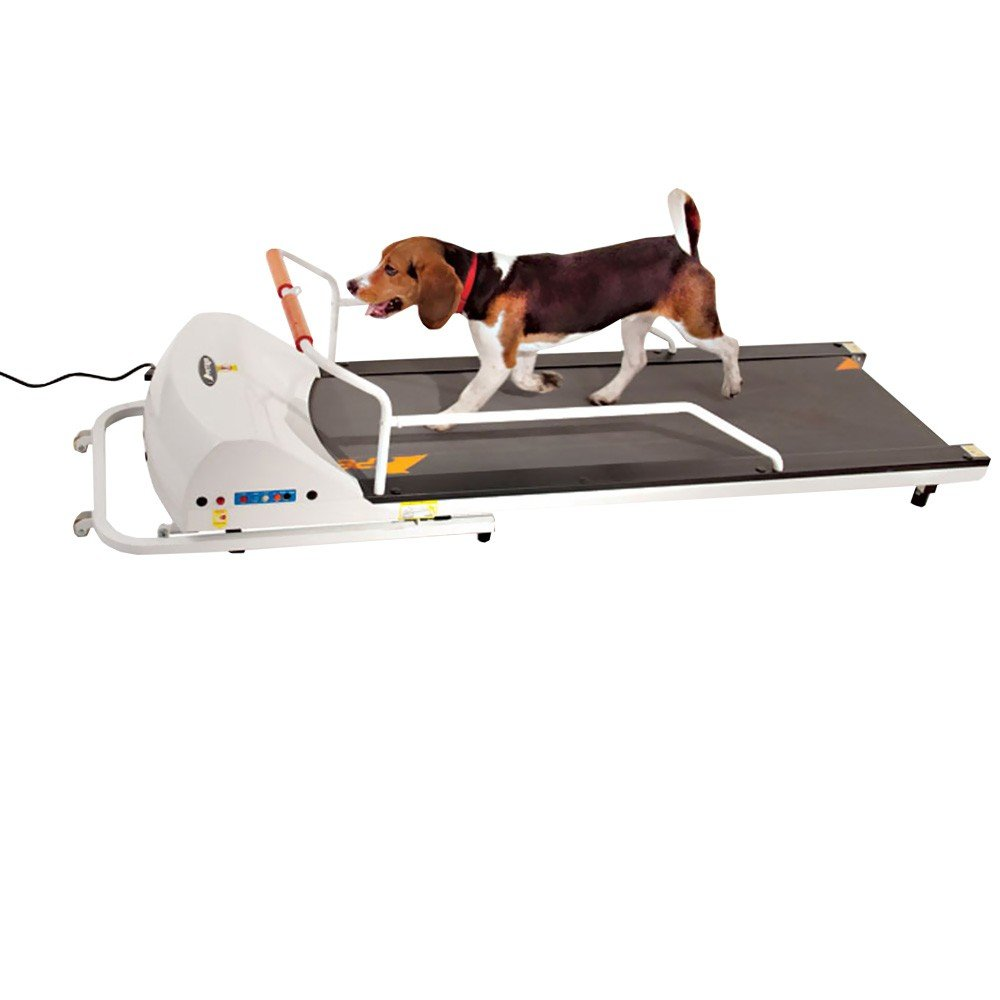 GoPet Treadmill SmallMedium (<132lbs)